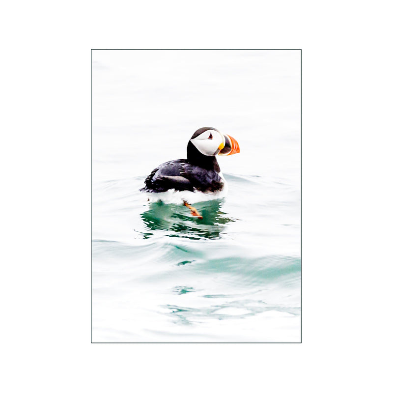 Possibly Puffin