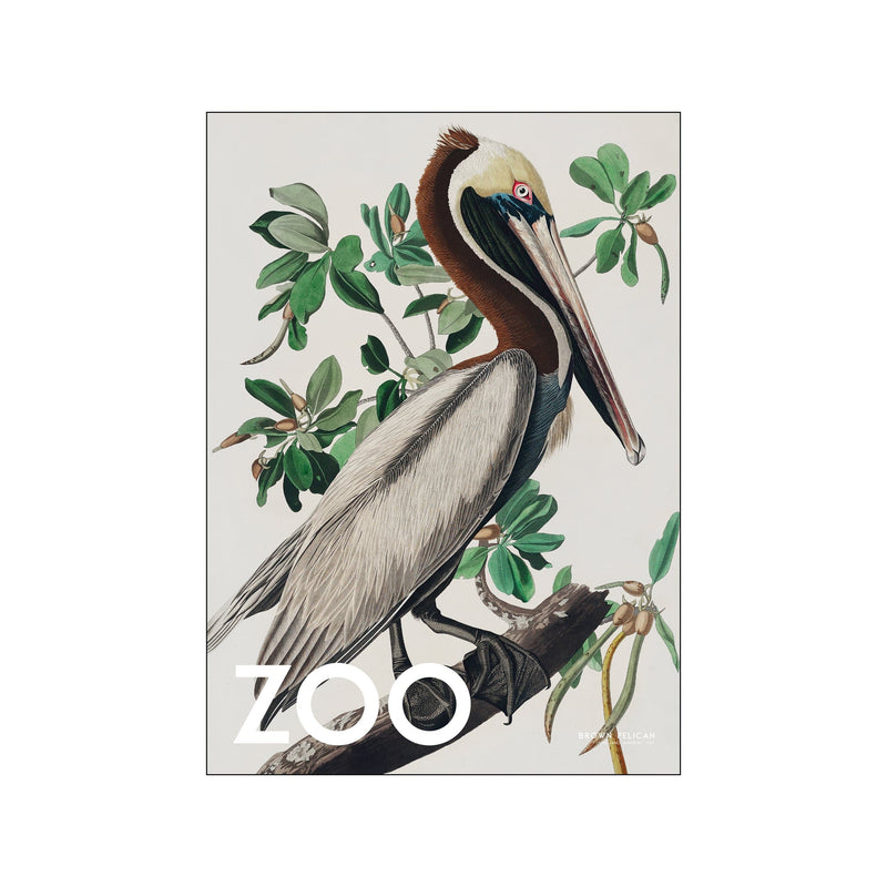 The Zoo Collection — Brown Pelican — Edt. 002