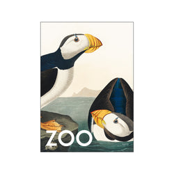 The Zoo Collection — Puffin — Edt. 002