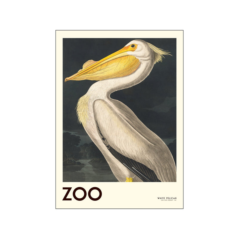 The Zoo Collection — White Pelican — Edt. 001