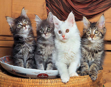 Special Order - 4 Cats in a Basket - Full Drill Diamond Painting- Specially ordered for you. Delivery is approximately 4 - 6 weeks.