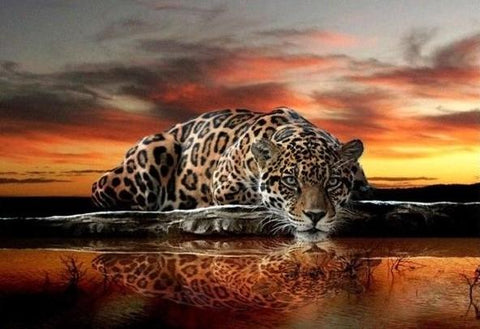 Leopard at Sunset - 61 x 91.5cm (poster size) Full Drill (square) Diamond Painting Kit - Currently in stock