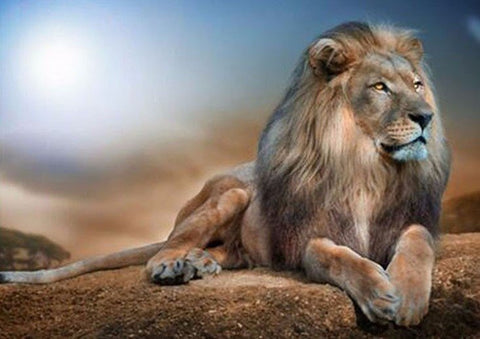 Lion 002 - Full Drill Diamond Painting - Specially ordered for you. Delivery is approximately 4 - 6 weeks.