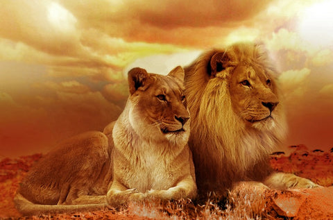 Special Order - Lions- Full Drill diamond painting - Specially ordered for you. Delivery is approximately 4 - 6 weeks.