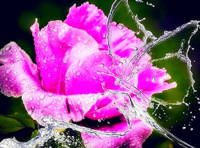 Special Order - Rose and Water - Full Drill diamond painting - Specially ordered for you. Delivery is approximately 4 - 6 weeks.