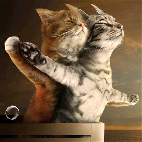 Special Order - Titanic Cats - Full Drill Diamond Painting - Specially ordered for you. Delivery is approximately 4 - 6 weeks.