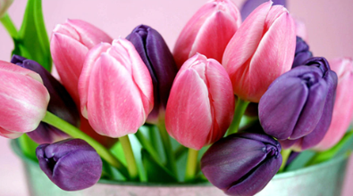 Special Order - Tulips 02- Full Drill Diamond Painting - Specially ordered for you. Delivery is approximately 4 - 6 weeks.