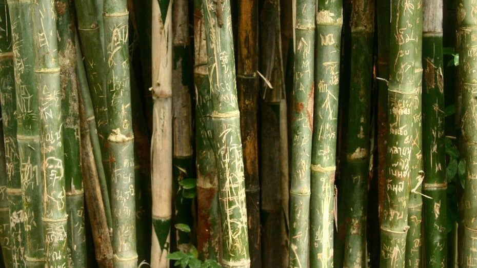 Six Quick Pros and Cons of Bamboo Straws For Your Bar or Restaurant. Bamboo straws look fun and are biodegradable, but are disposable and pose health and safety concerns.