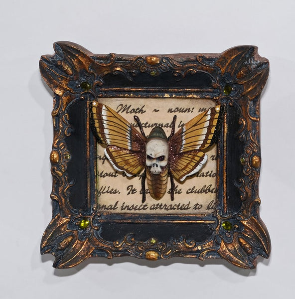 Framed Butterfly Oddity - Katherine's Collection