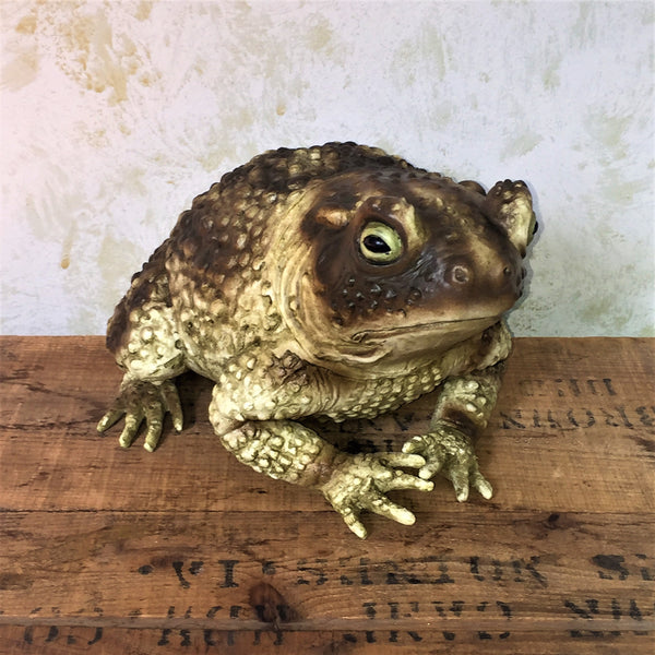 Large Display Toad