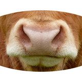 Cow Face - Adult & Youth  Non-Medical Face Mask (5573612142757)