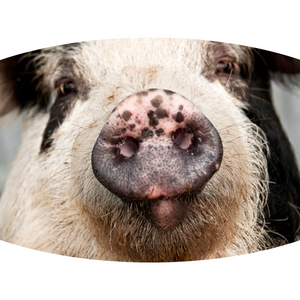 Pig Face (2 Styles!) - Adult & Youth  Non-Medical Face Mask (5573727125669)