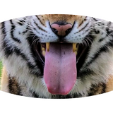 Tiger Face - Adult Non-Medical Face Mask (5573597462693)