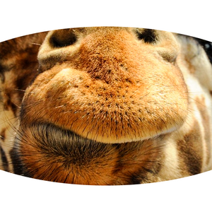 Giraffe Face - Adult & Youth  Non-Medical Face Mask (5573706580133)