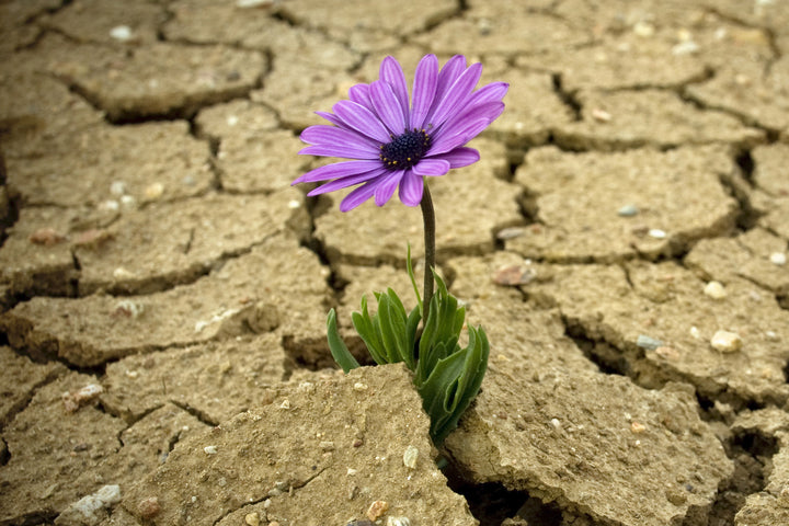 3 Ways to Cultivate Resilience and Thrive