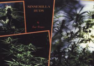 Sinsemilla Buds Post Cards