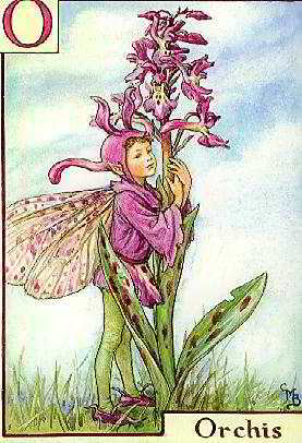 Mary Cicely Barker - Post Cards