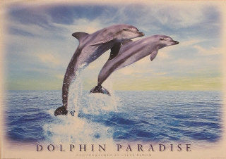 Dolphin Paradise Posters