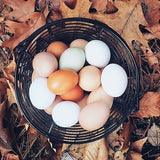 Eggs from Riverweb Farm in Phillips & Avon, Maine
