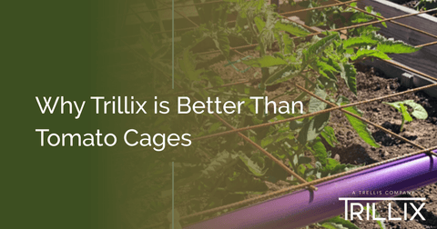 Why Trillix is Better Than Tomato Cages