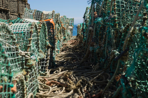 Ghost Fishing Impacts