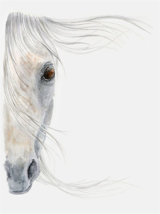 Gray Horse Portrait Canvas Wall Art - Horse Country Trading Company