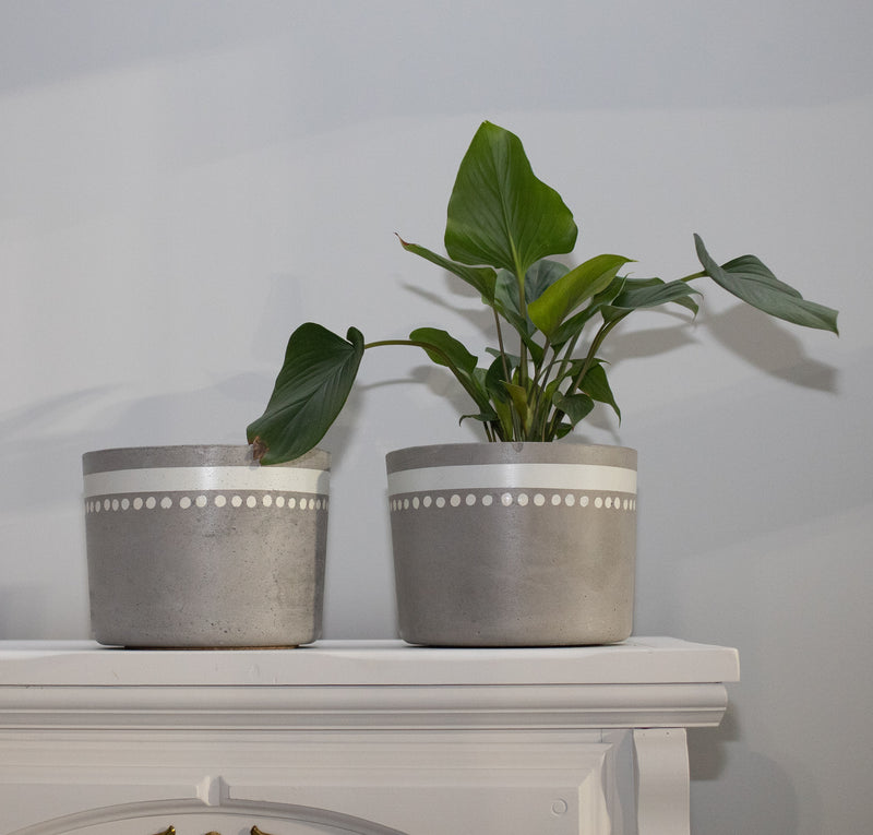 Medium Concrete Planter white stripper