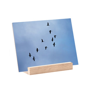 Fine Art Print; Birds Fly Free