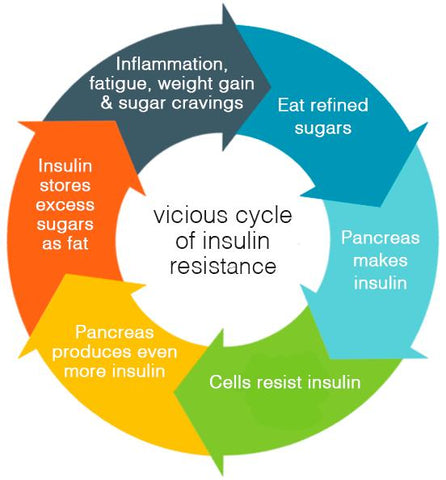 insulin cycle