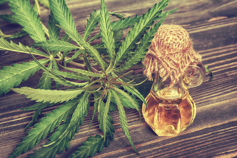 Hemp plant shown next to CBD oil to show that you can buy CBD oil online here.