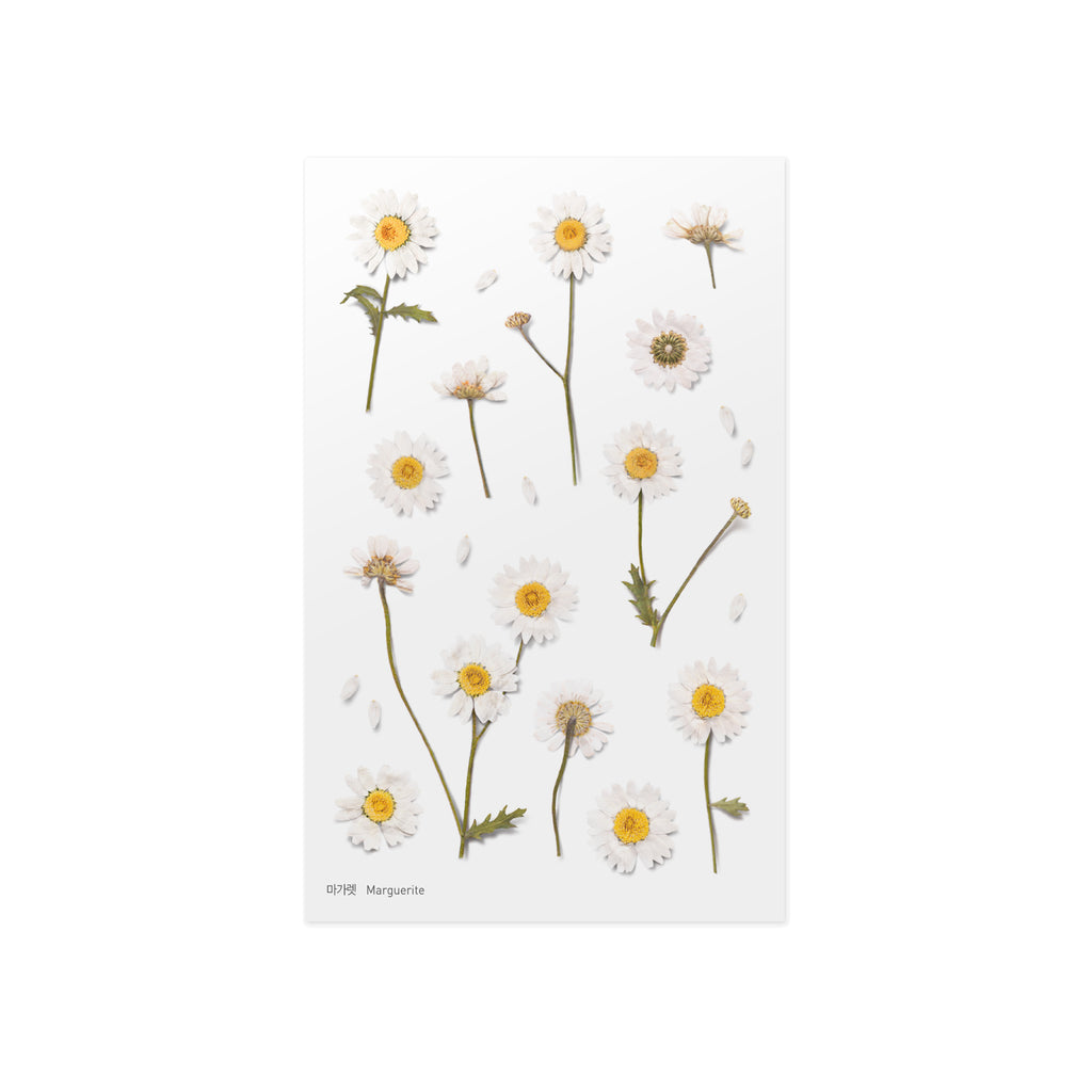 Pressed Flower Stickers - Marguerite - Paper Kooka