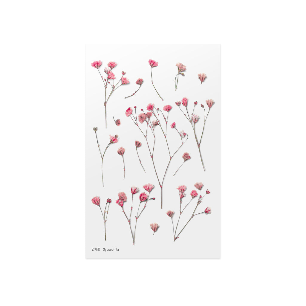 Pressed Flower Stickers - Gypsophila - Paper Kooka