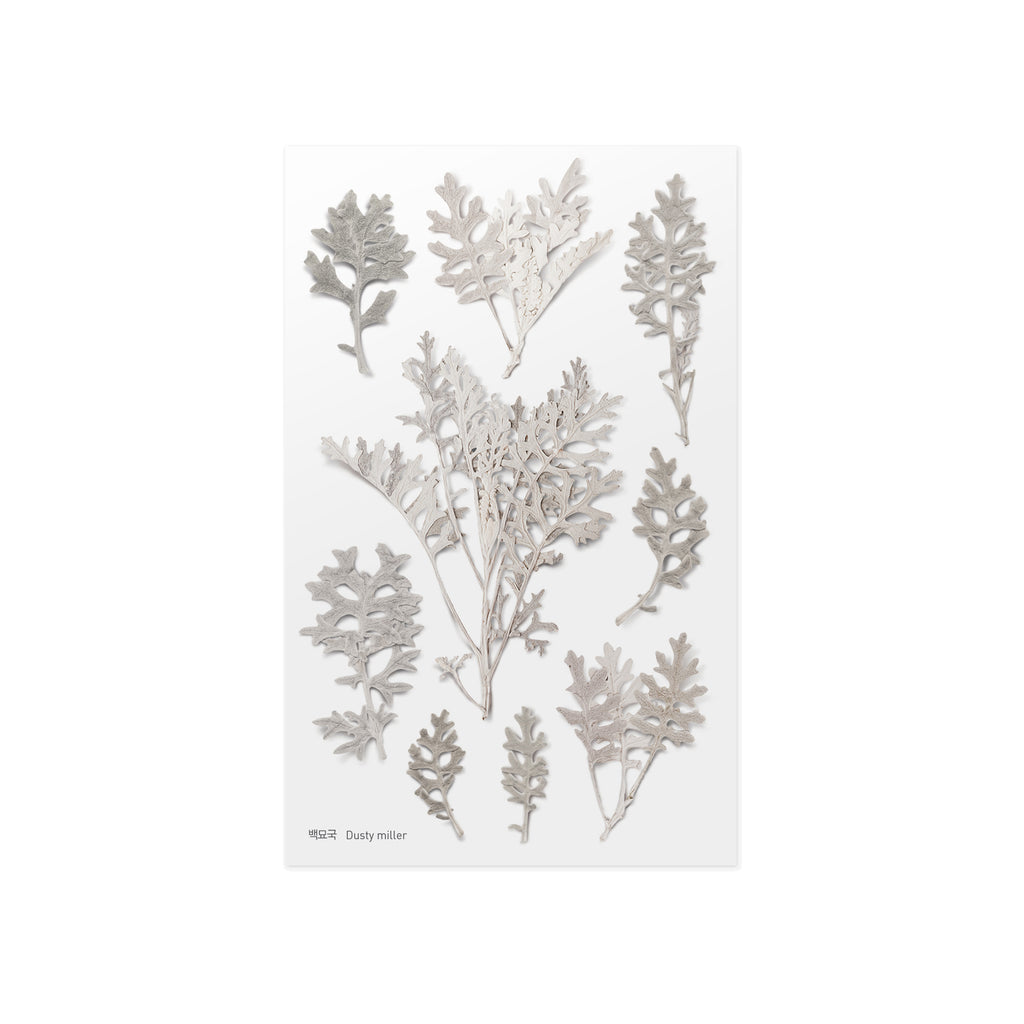 Pressed Flower Stickers - Dusty Miller - Have a Point
