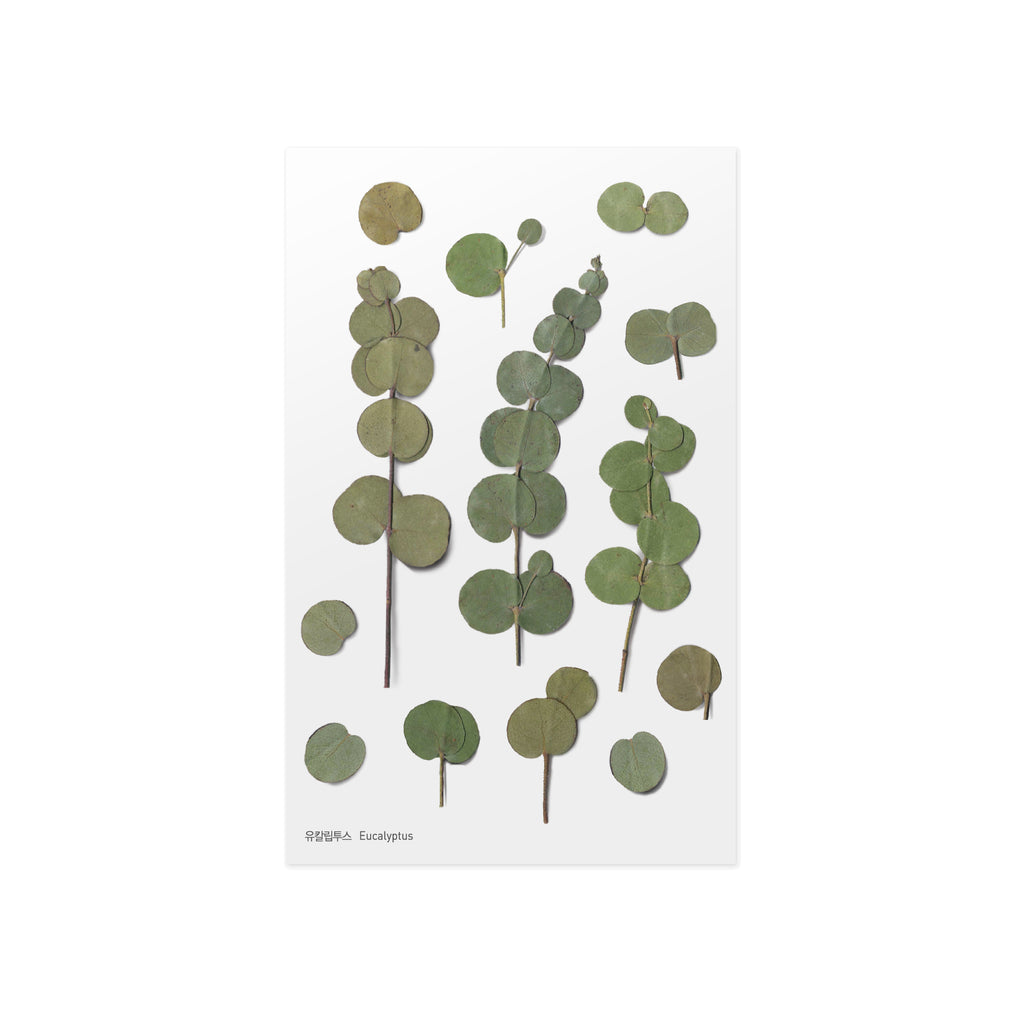Pressed Flower Stickers - Eucalyptus - Paper Kooka