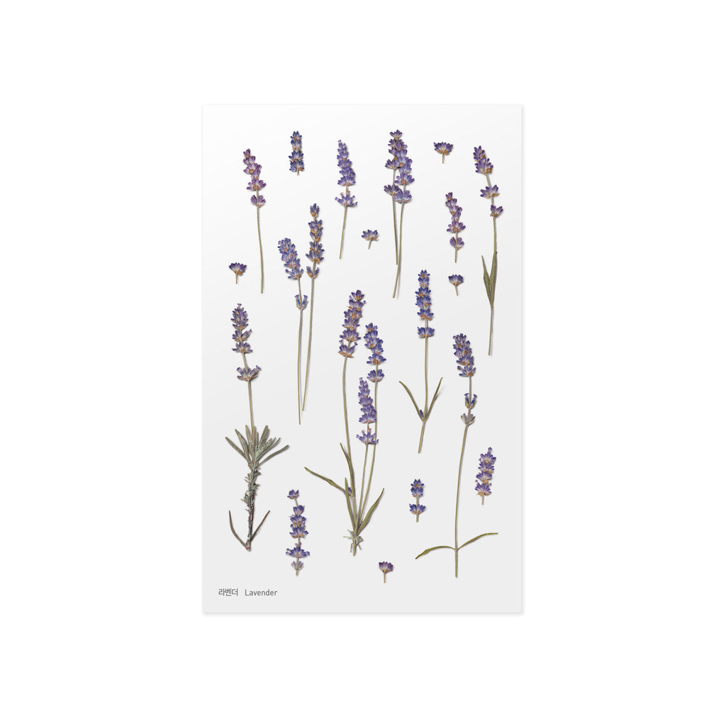 Pressed Flower Stickers - Lavender - Paper Kooka