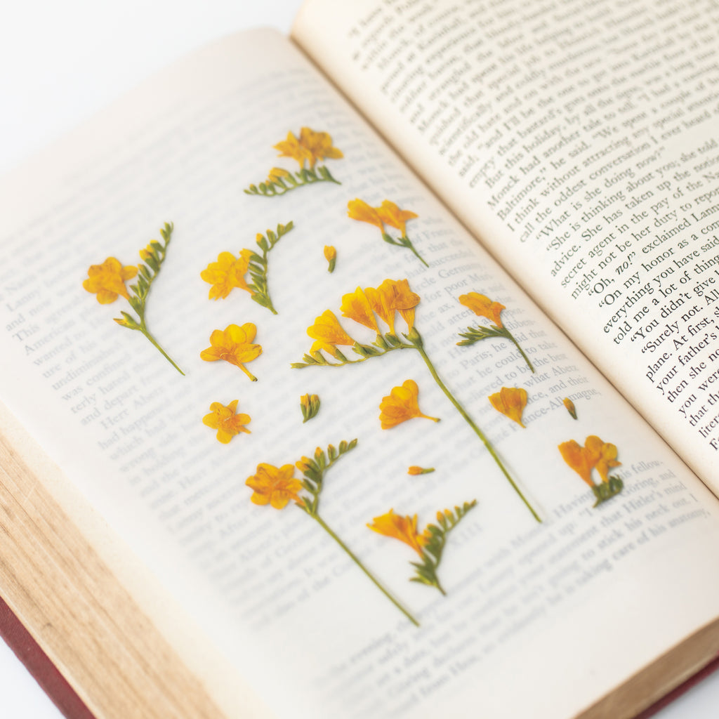 Pressed Flower Stickers - Freesia - Have a Point