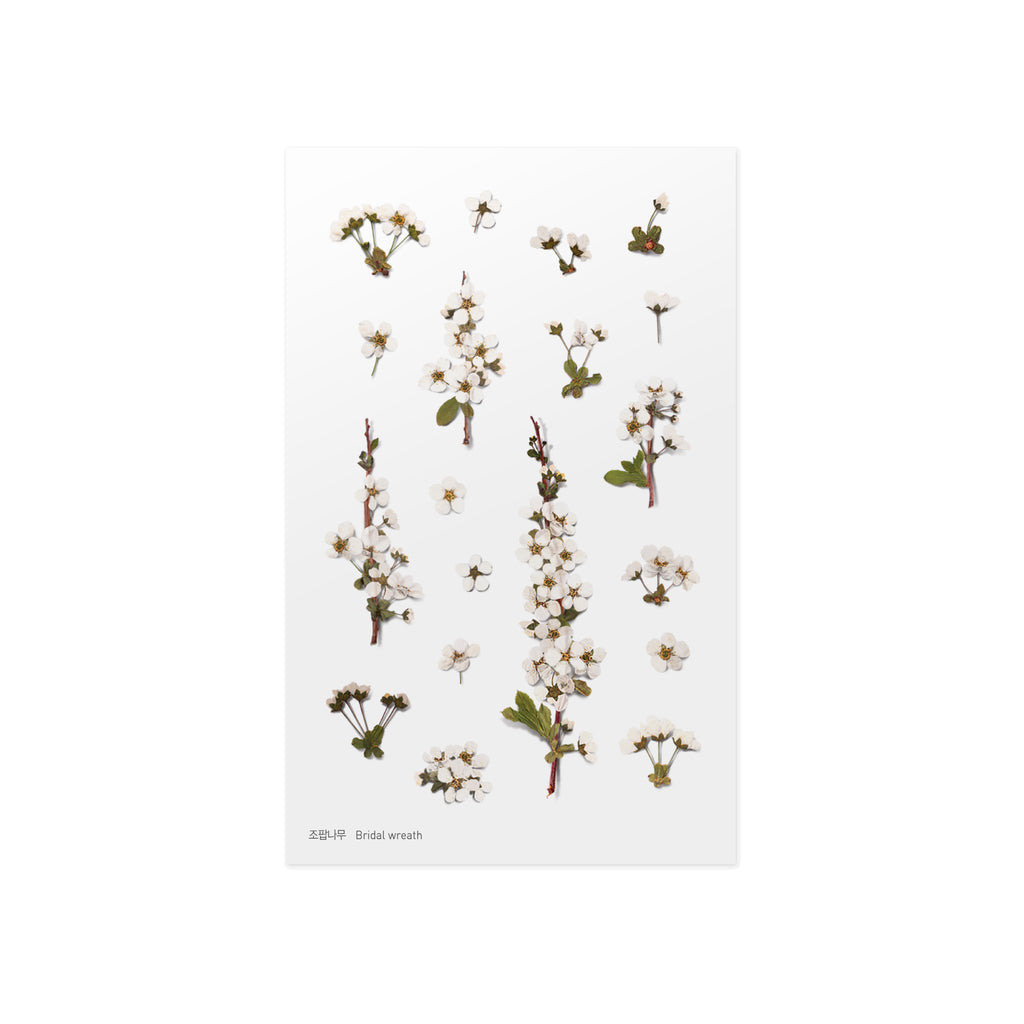 Pressed Flower Stickers - Bridal Wreath - Have a Point