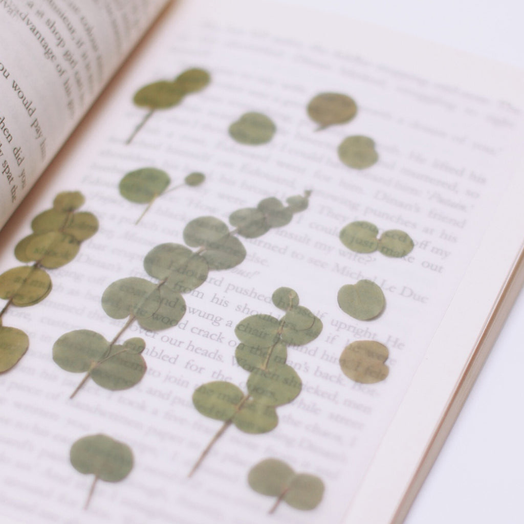 Pressed Flower Stickers - Eucalyptus - Have a Point