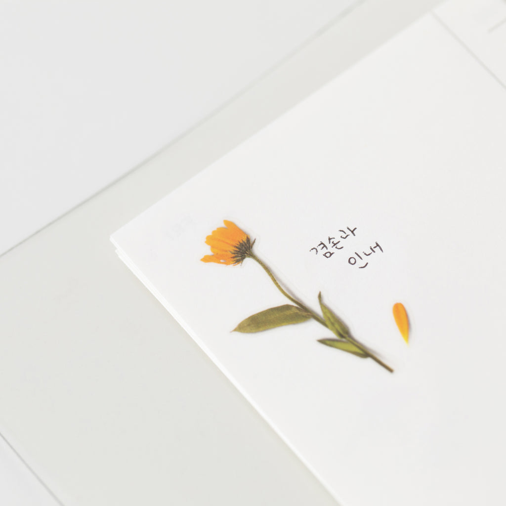 Pressed Flower Stickers - Calendula - Paper Kooka