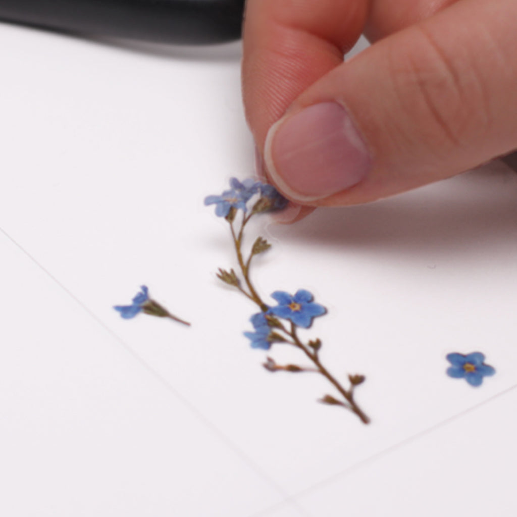 Pressed Flower Stickers - Forget Me Not - Have a Point