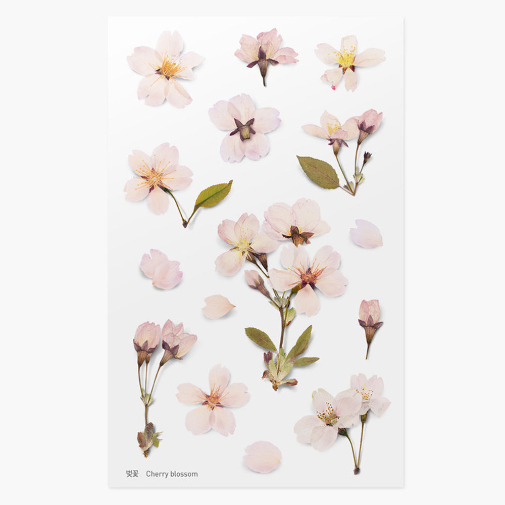 Pressed Flower Stickers - Cherry Blossom - Paper Kooka