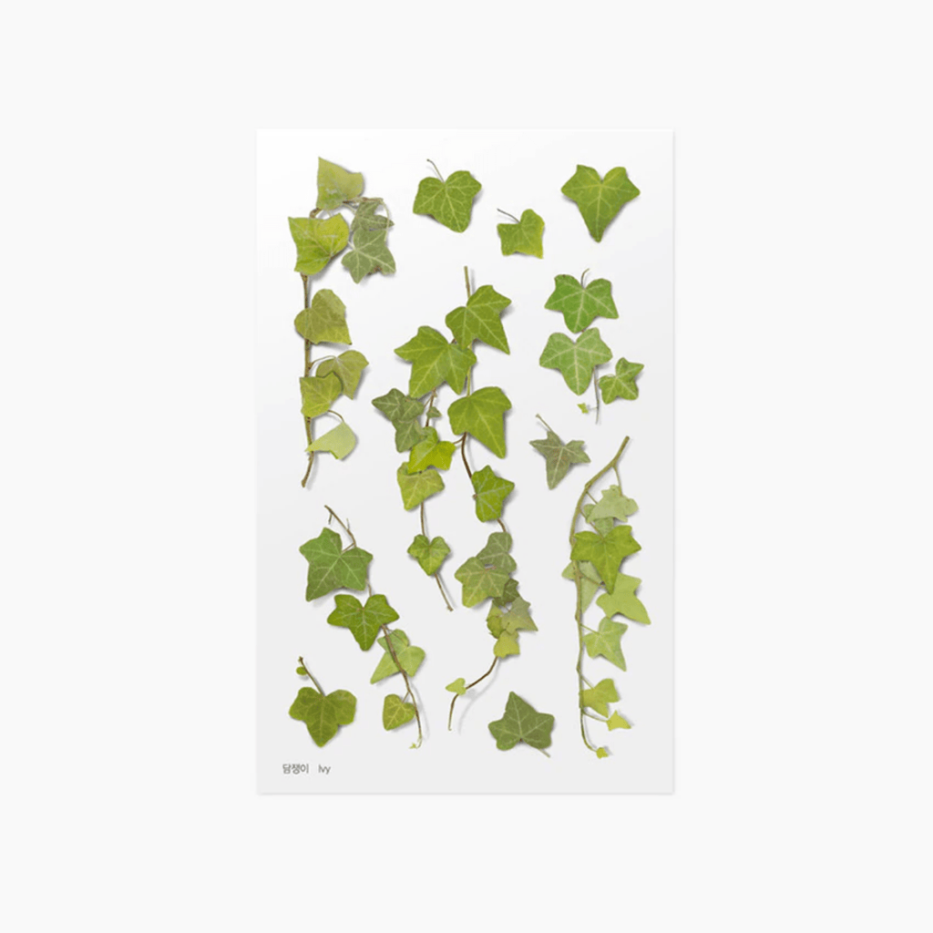 Pressed Flower Stickers - Ivy - Paper Kooka