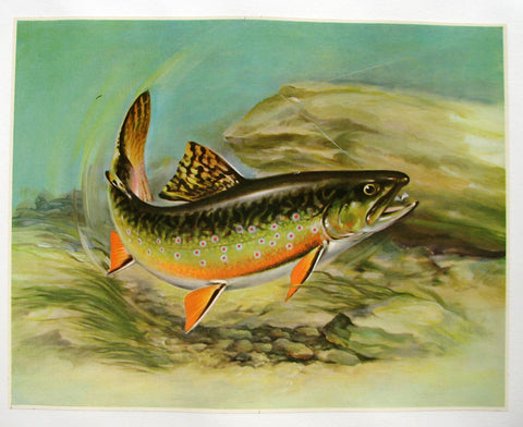 1940's Angry Trout & Lure Antique Fishing Vintage Fish Poster