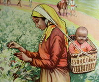 1930's British Tea Pickers in India Vintage Children's Poster