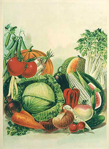 1900 Victorian Vegetables Vintage Seed & Organic Food Poster