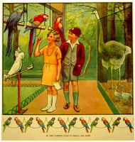 1930's British Parrots & Cockatoo Bird Vintage Children's Poster