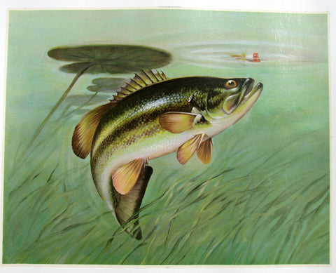 1940's Trout & Lure Lily Pad Antique Fishing Vintage Fish Poster
