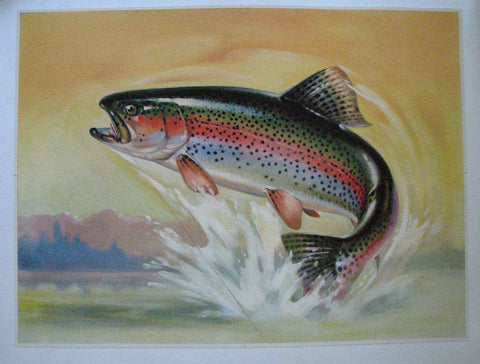 1940's Rainbow Trout & Fly Antique Fly Fishing Vintage Fish Poster