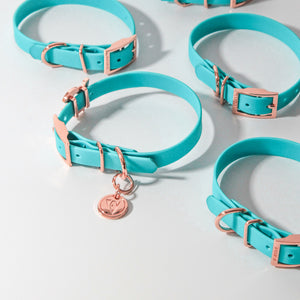 Valgray Turquoise and Rose Gold Waterproof Dog Collar for Small Dog Breeds