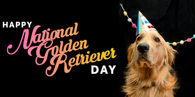 Happy National Golden Retriever Day!
